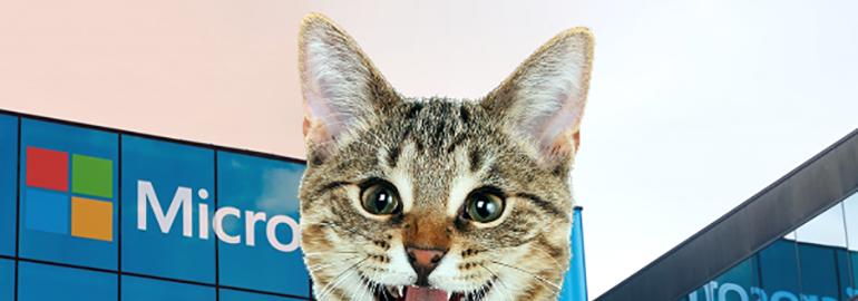 Обложка: Самый милый пост в истории Tproger: жизнь программиста в гифках с котиками