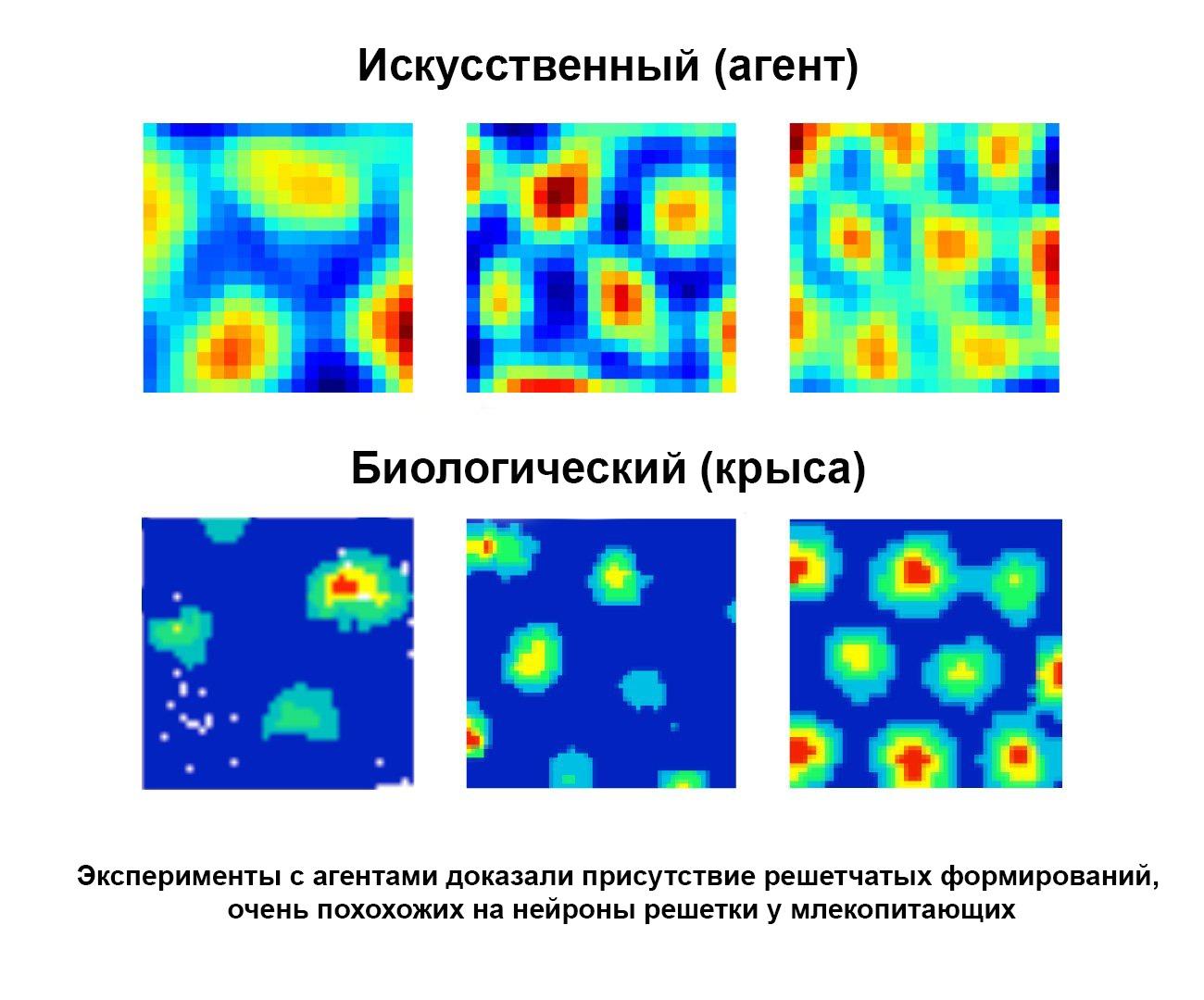 Нейроны решетки