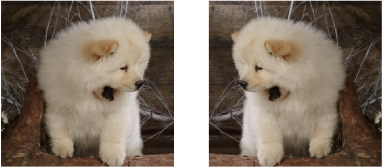 Алгоритм AutoAugment отражение