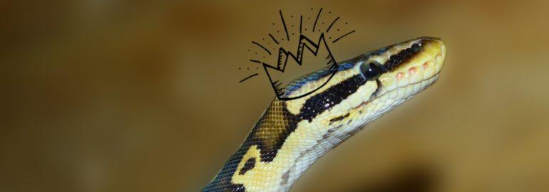 Python стал языком 2018 года в TIOBE