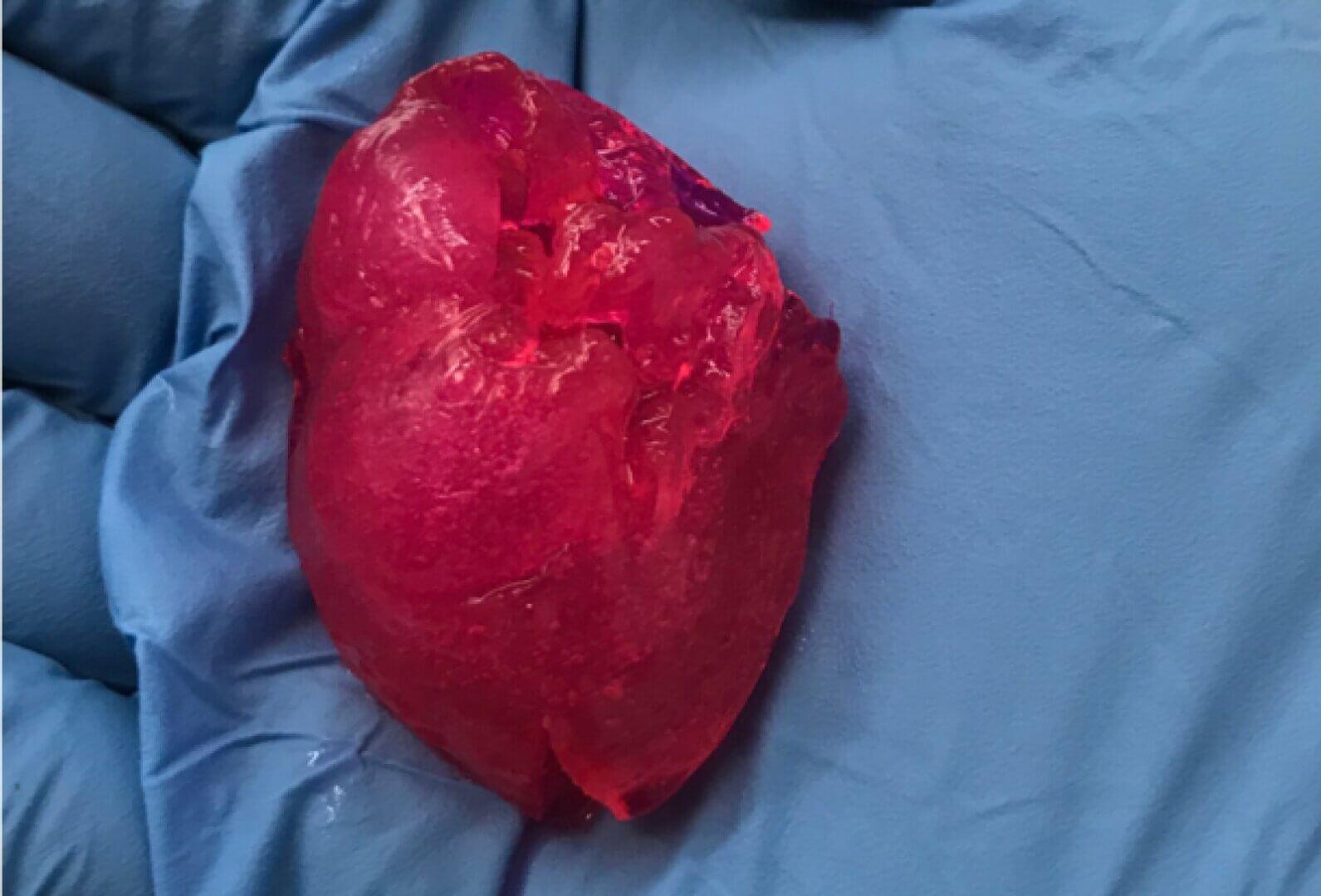 В Чикаго напечатали на 3D-принтере мини-сердце
