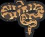Обложка: 10 полезных Python библиотек, о которых вы не слышали
